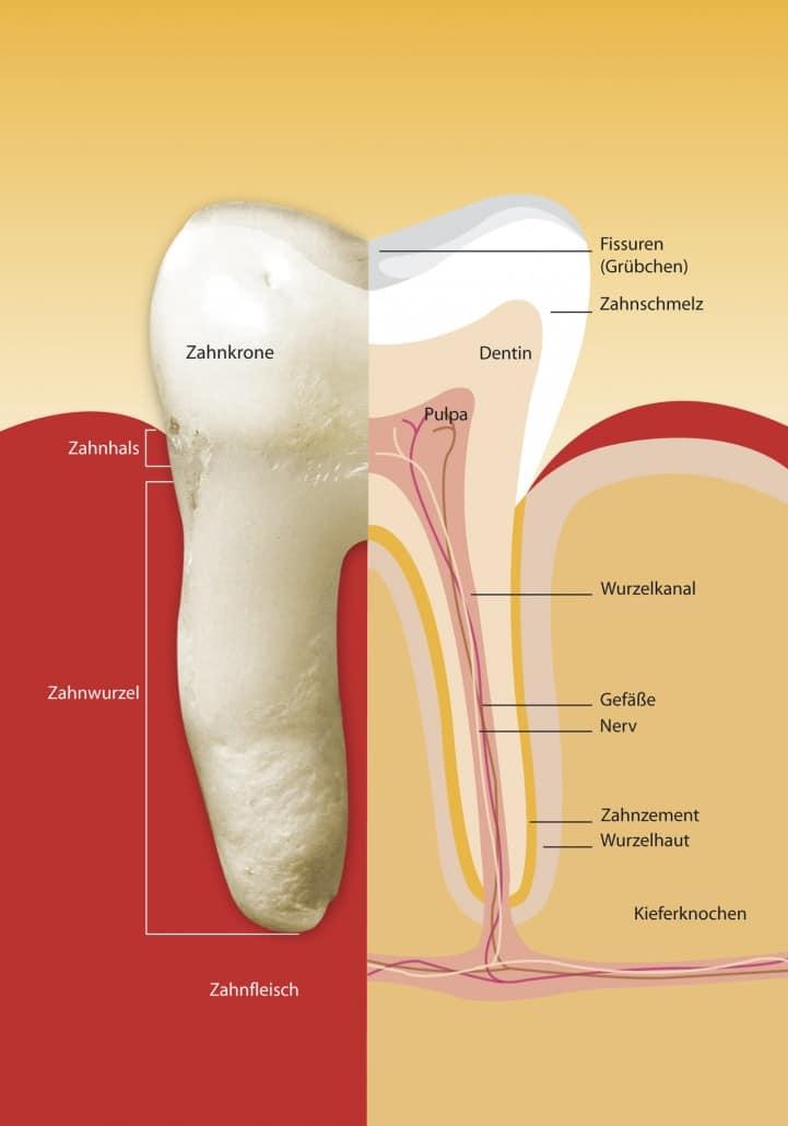 Endodontie (Wurzelkanalbehandlung) Köln | topDentis Cologne